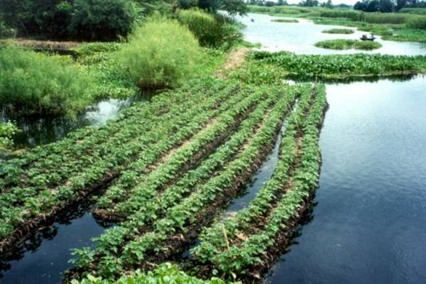 aztec agriculture practices - 600×392